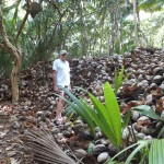 Trees have returned and coconut production is witnessed by this huge pile of husks.